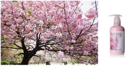 bottega verde cherry blossom body milk